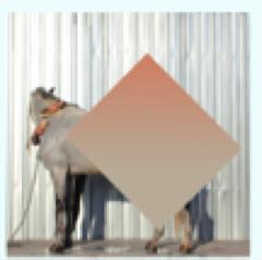 Serie: Los ojos serán los últimos en pixelarse (B)