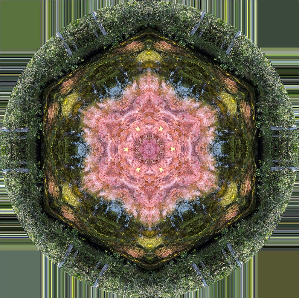 Macarenia Clavijera Mandala (Caño Cristales)