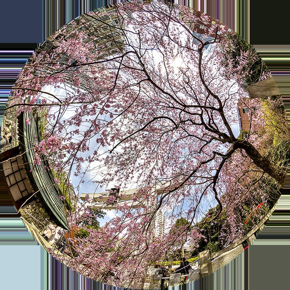 Templo Florecido (Tokio, Japón)