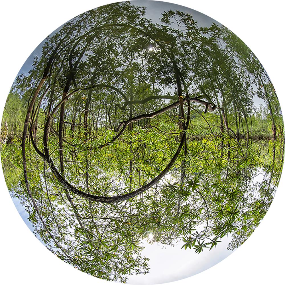 Simetría Natural (Ensenada de la Utría, Chocó)